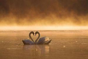Iubirea-suprinsa-in-fotografii-15